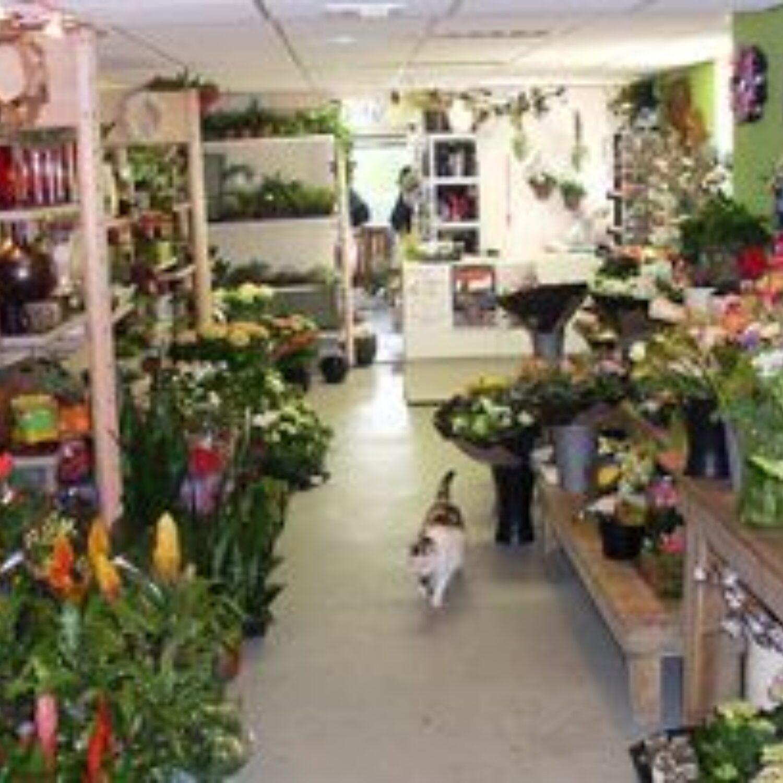 Bloemenwinkel Het Berkje 290X204